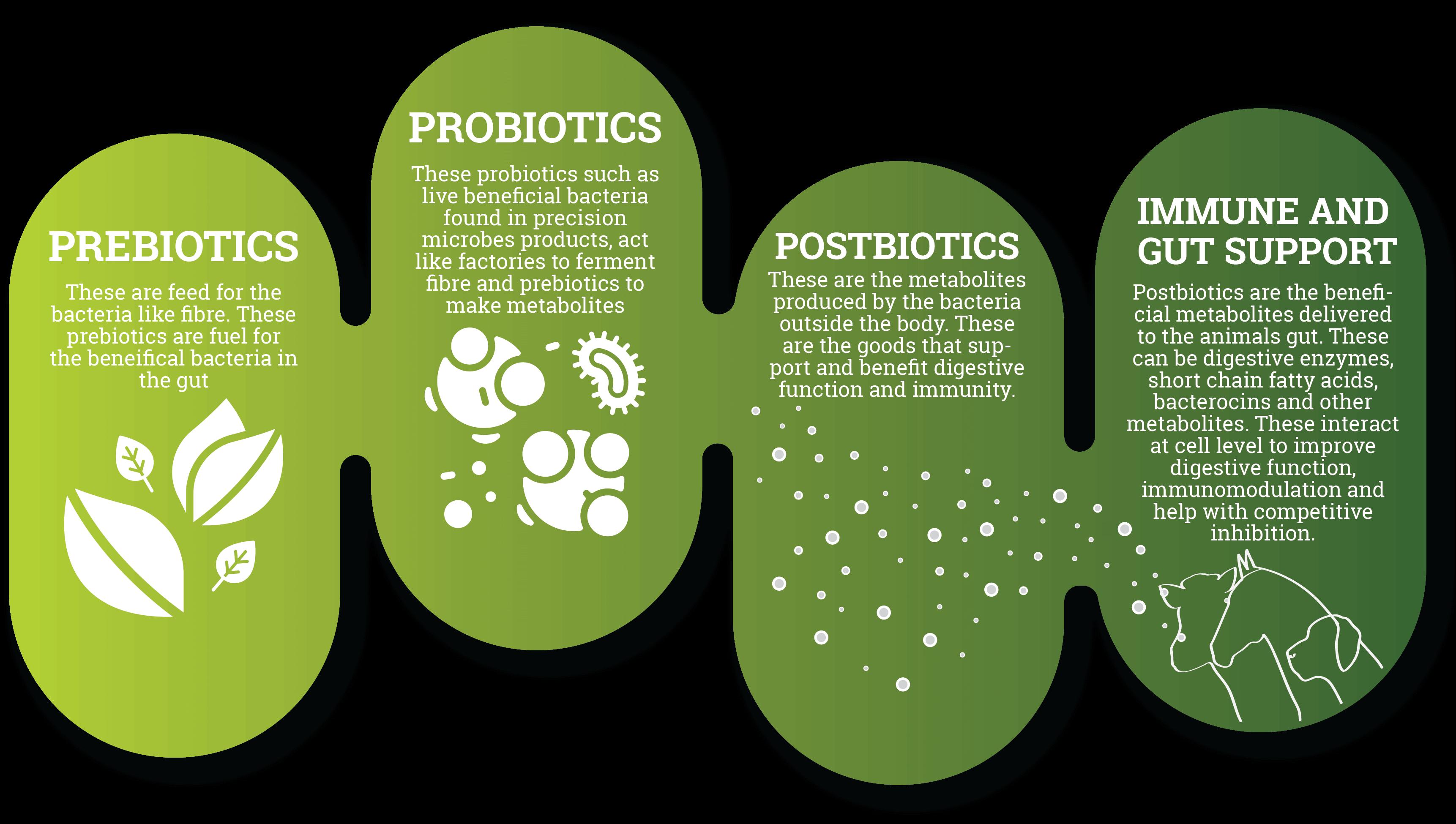 Prebiotics Probiotics Postbiotics Infographic