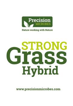 Grass Hybrid